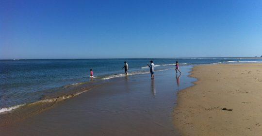 people playing in ocean